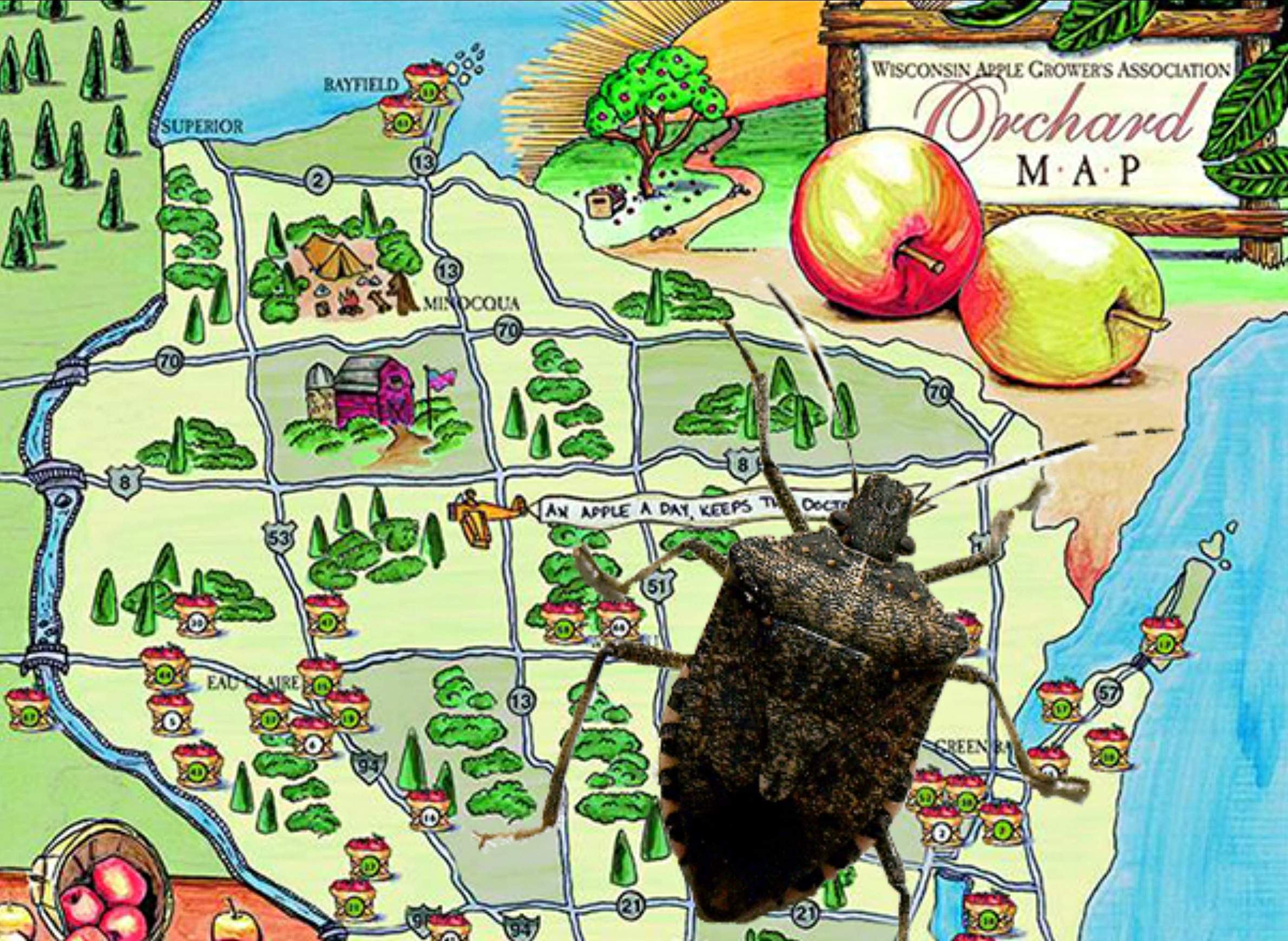 Brown marmorated stink bug spreads in Wisconsin